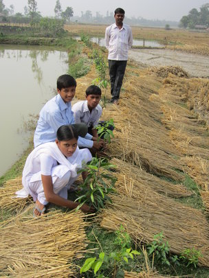 Plant 1,000 Saplings in the Sundarbans
