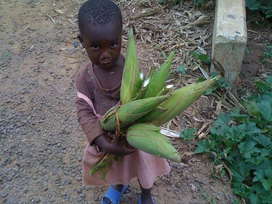maize as one of the visions to be caltivate on thi