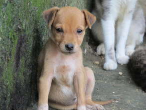 Feed 120 abandoned animals in Cartagena for 1 year