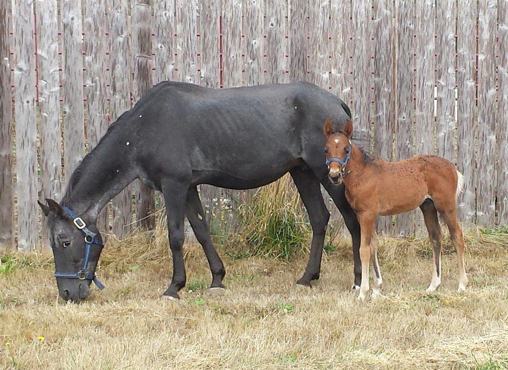 Zippy (mare), Korky (colt) 2 wks of rehabilitation
