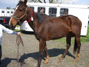 This is the same horse as in photo 3, before educa