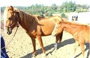 Educate 1000's in Animal Welfare in Oregon