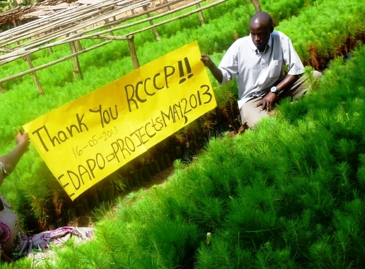 Pine seedlings project at EDAPO