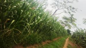 current EDAPO Farm2