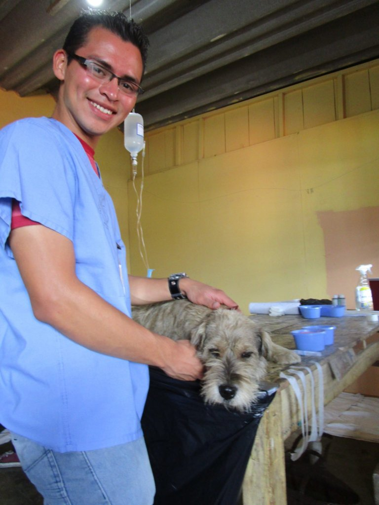 Volunteering with local pet rescue charity