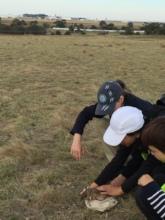 Volunteers releasing bandicoot after health check