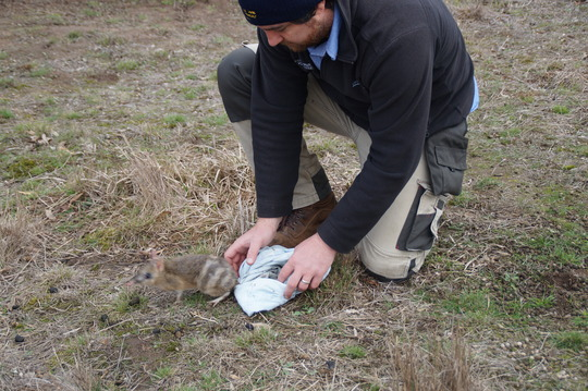 Project Leader Travis releasing a beloved 'coot'