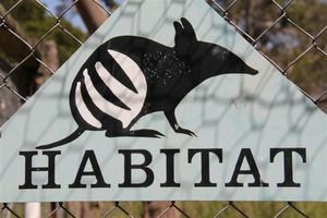 New habitat for Bandicoots!