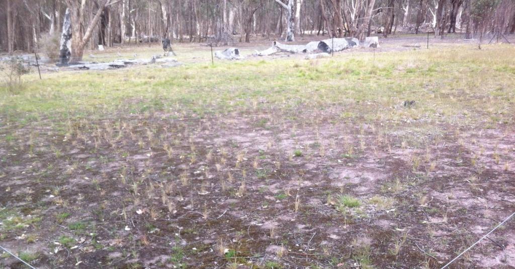 Grassland plantings