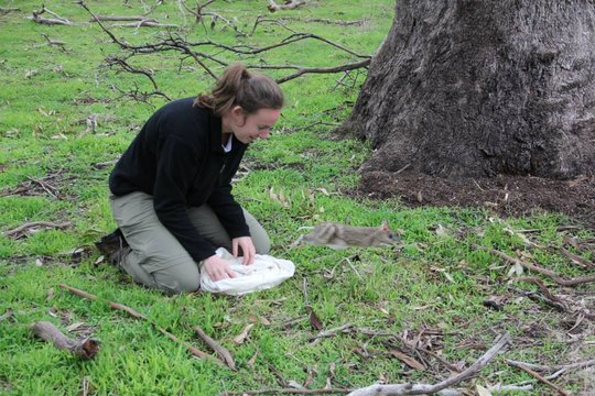 Liz from our Melbourne team releasing super-coot!