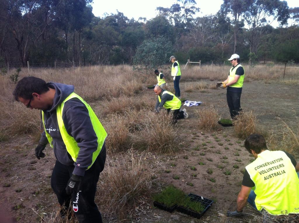 Planting important habitat at Woodlands