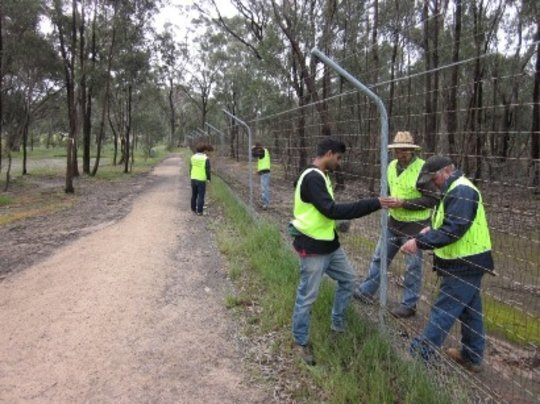Volunteers maintaining the predator-proof fence