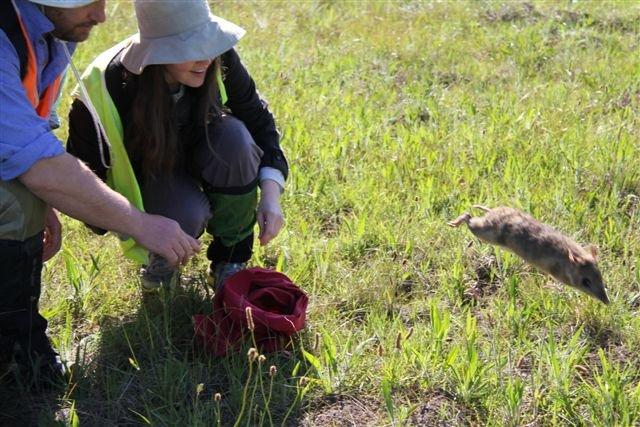 Help Protect Endangered Bandicoots