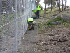 Volunteers installing protective fence