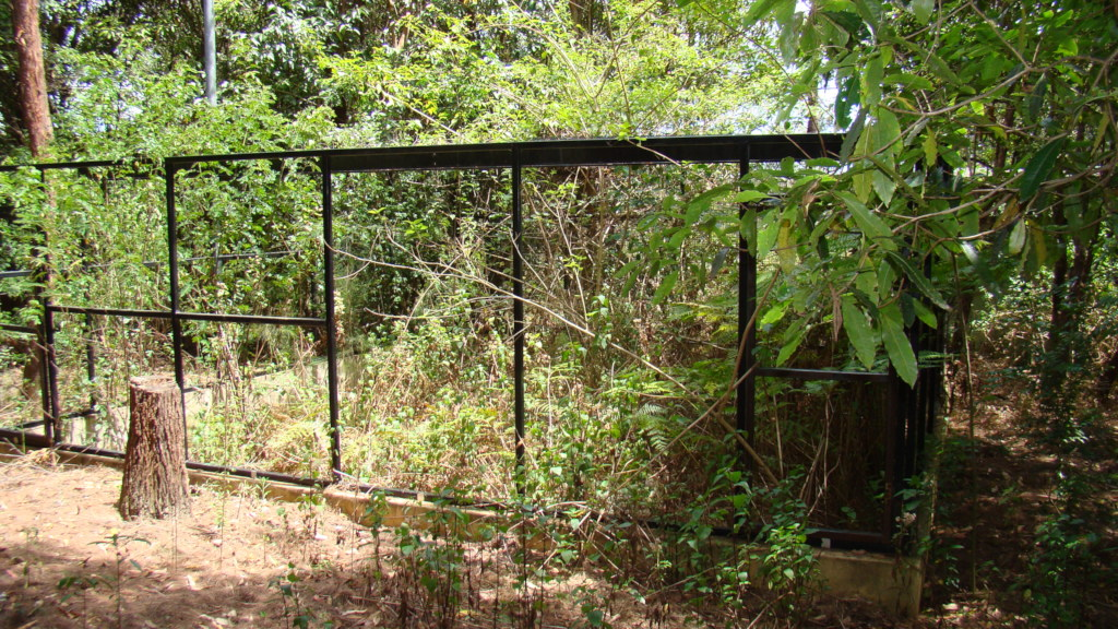 Is part of an old aviary in the weeds?