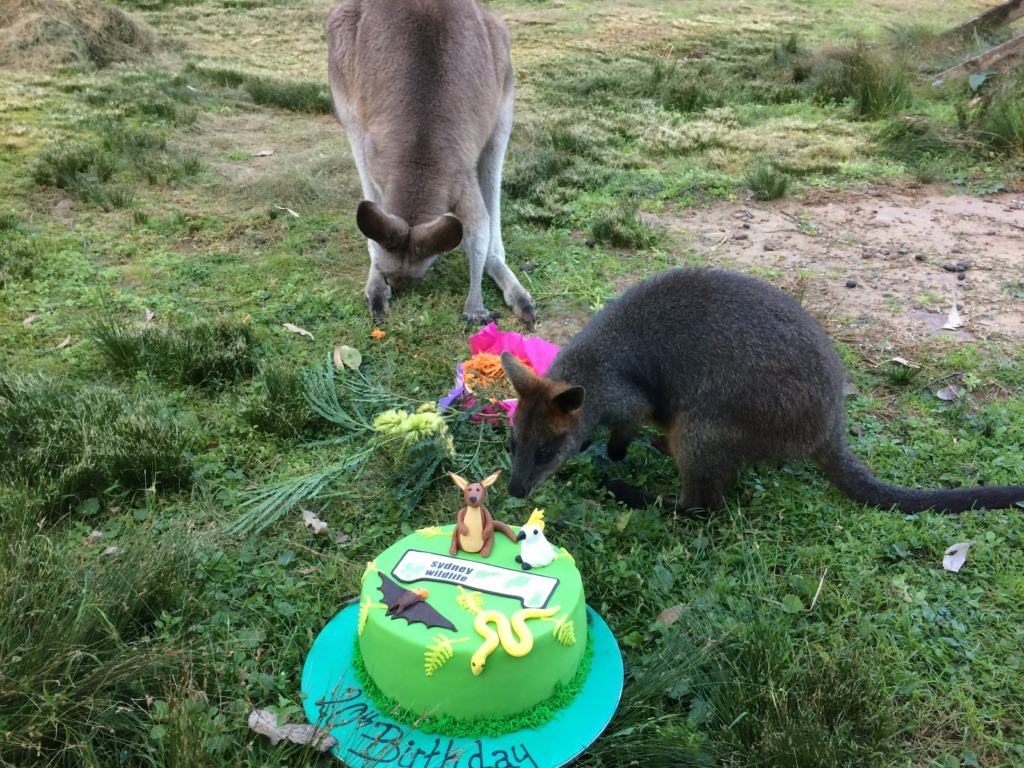 Cloudy and Cassius wanting cake