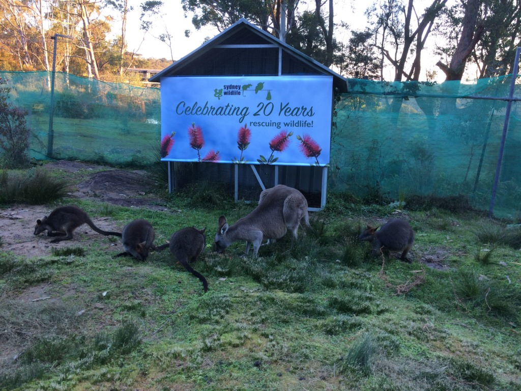 The people leave the dehumanised wallabies appear.