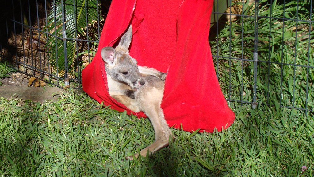 Rehabilitate Wallabies & Other Native Wildlife