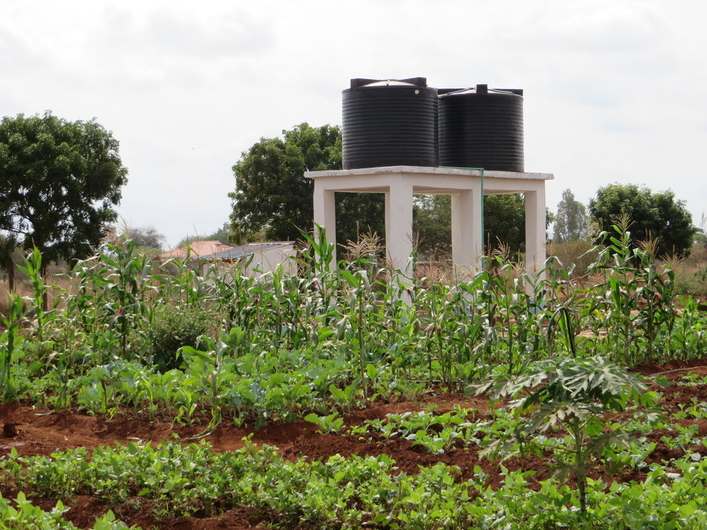 Healthy crops & water holding tank