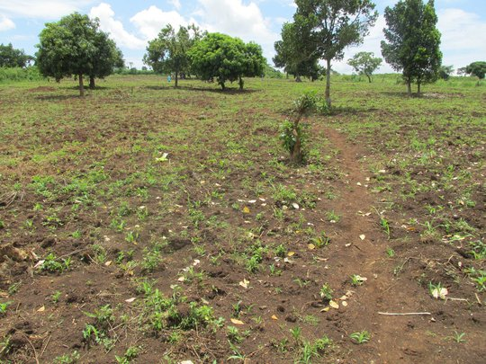 April - Land is cleared, planted w/maize