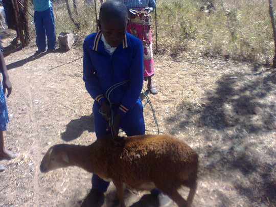 Behave with one of his goats