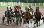 T.R.O.T.T.E.R. (Race horse Rescue & Adoption)