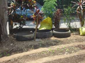 Food plants can also be grown in old tires