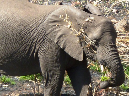 Help save elephants in Malawi