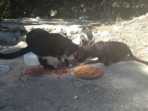Stray cats getting fed