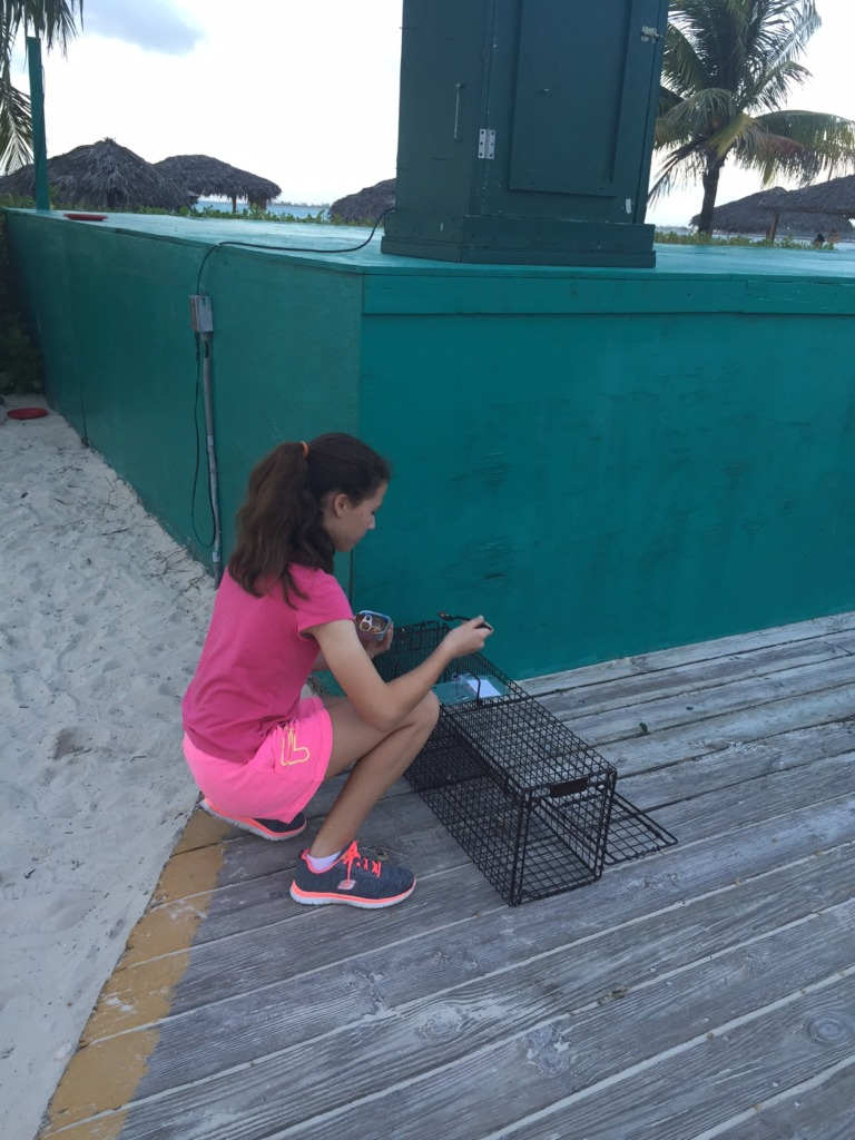 Volunteer Taylor setting the traps