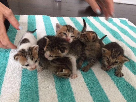 Kittens Growing Nicely