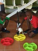 Petting in the cat enclosure