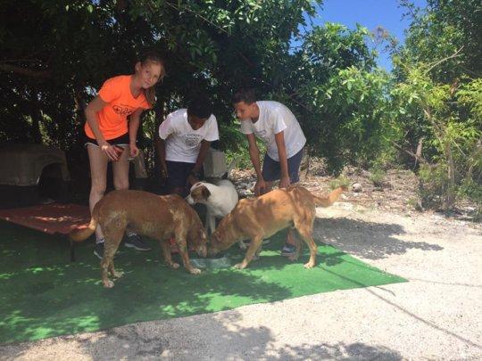 Loved Adelaide Dogs