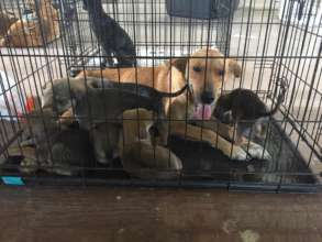 Mum and Pups to all be spayed