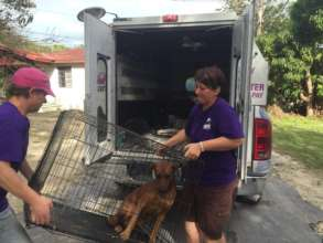 Volunteers Steph and Tahnee busy trapping dogs