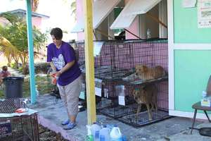 Tahnee working hard and dogs in recovery crates