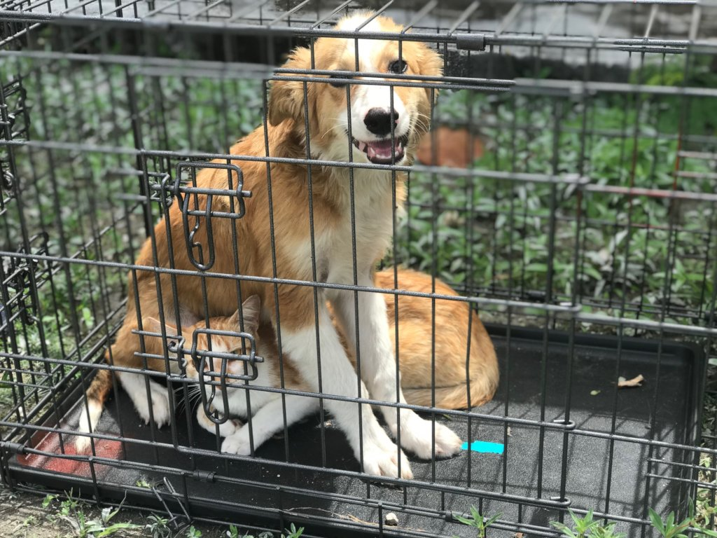Reports on Spay/Neuter 1,000 Stray Dogs & Cats in The ...