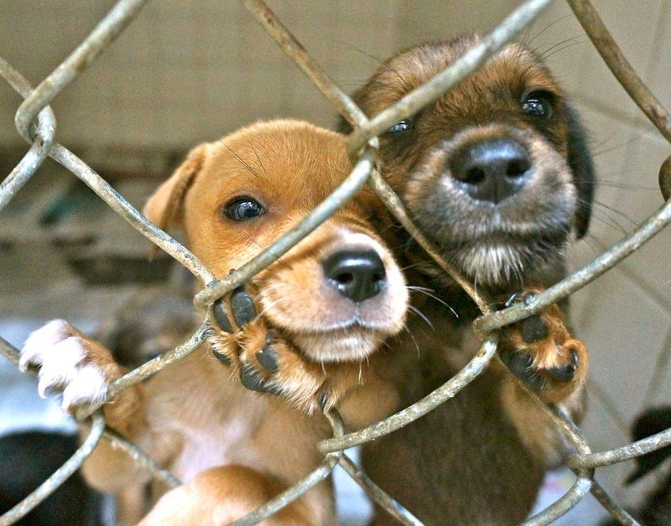 Spay/Neuter 1,000 Stray Dogs & Cats in The Bahamas