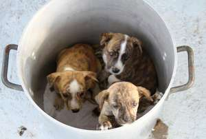 Photos from Spay/Neuter 1,000 Stray Dogs & Cats in The ...