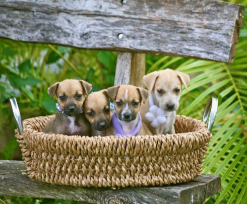 How to Share Spay/Neuter 1,000 Stray Dogs & Cats in The ...