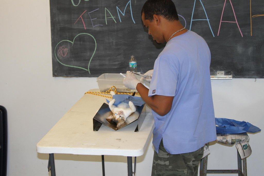 San Salvador MASH Clinic - Dr. Davis spaying cat