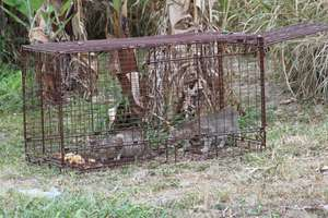 San Salvador - trapping 2 cats in a dog trap!