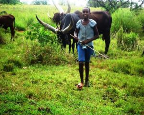 Peace herding cattle, unable to attend school