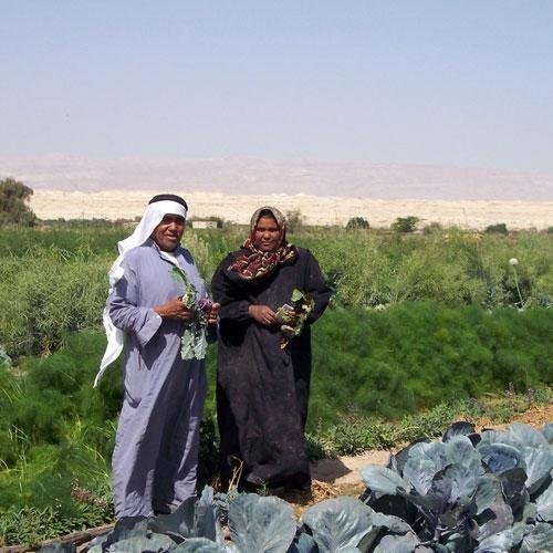 Income & Food Boosts From Fish-Farming in Jordan