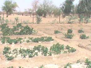 Gao garden plot: a pump will help plants thrive.