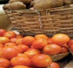 Gao tomatoe harvest 2013