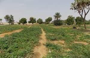 vegetable garden with pump