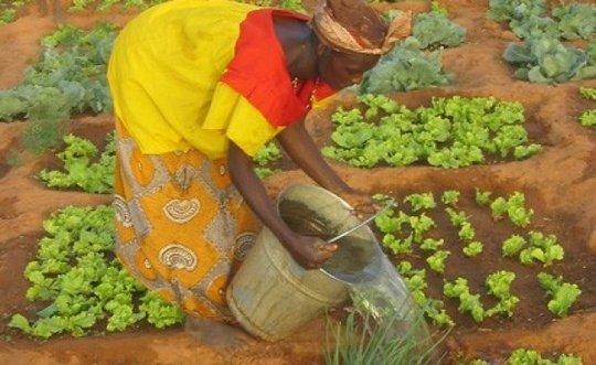 Woman farming in Gao region