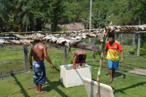 Men dry fish from the Tapajos River.