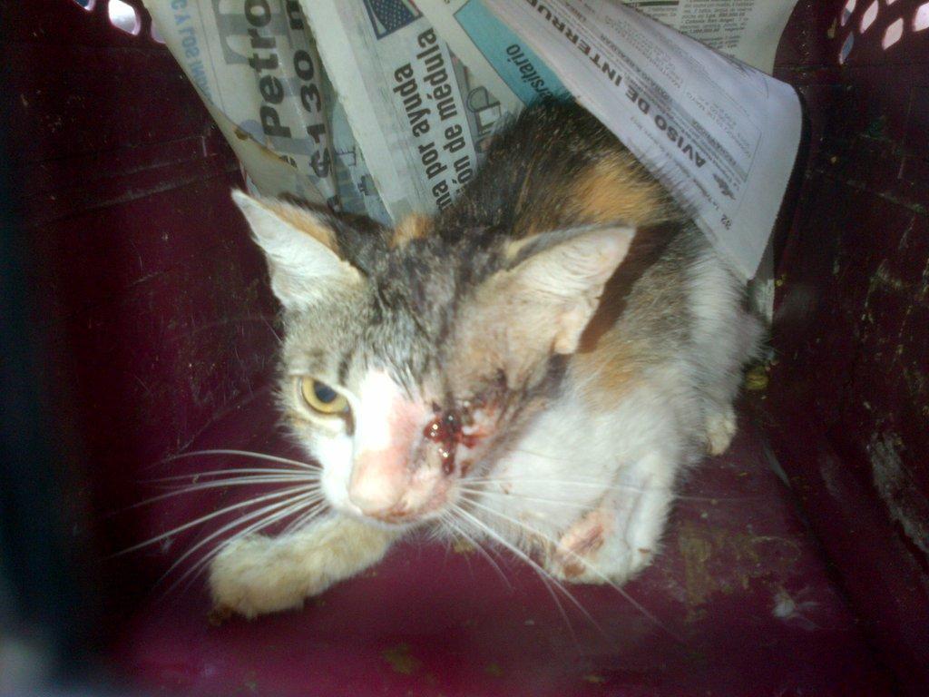 HHHH-AKI$ for surgery for feral cat, Honduras